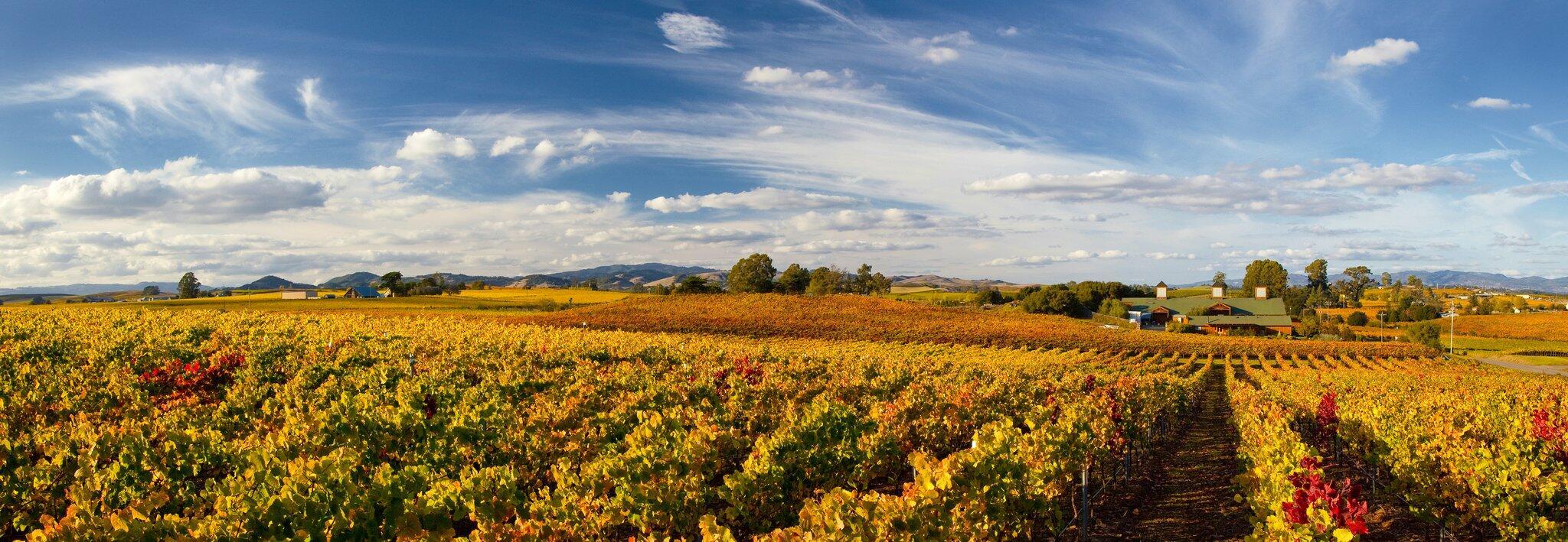 Bouchaine Vineyards Cover Image