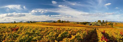 Bouchaine Vineyards Image