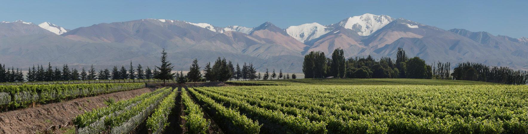 Falasco Wines Cover Image