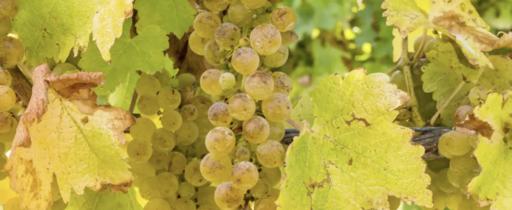 Yoonit Wine Image