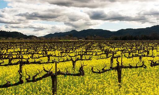 Vine Cliff Winery Image