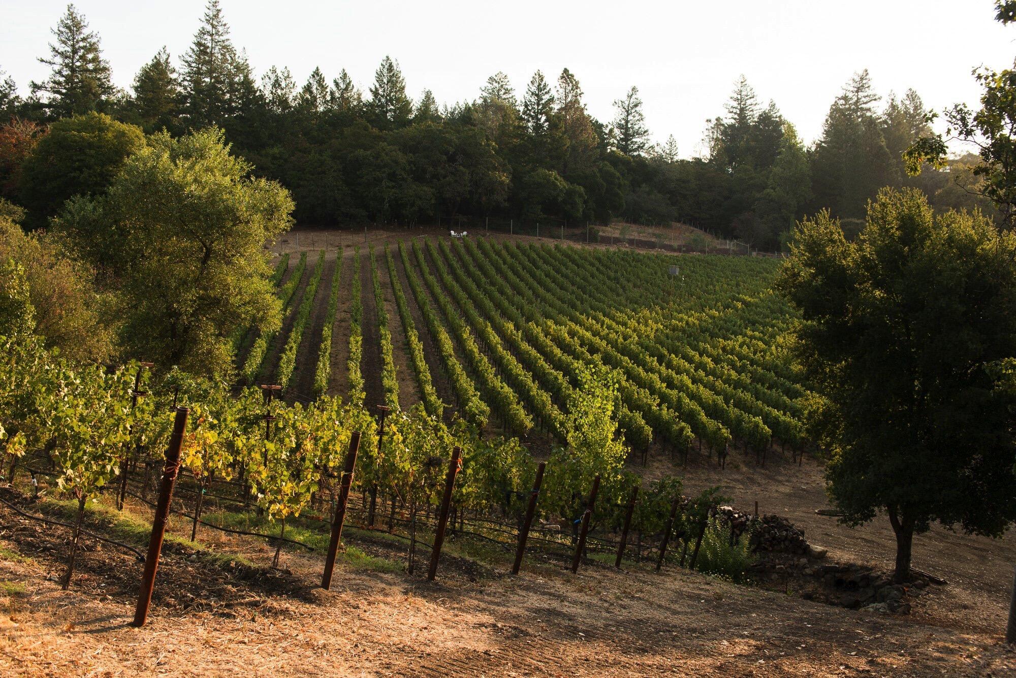 Knighton Family Vineyards Cover Image