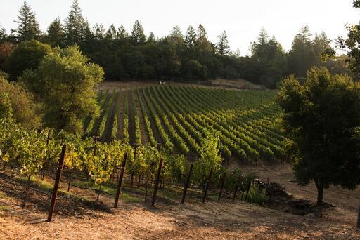 Knighton Family Vineyards Image