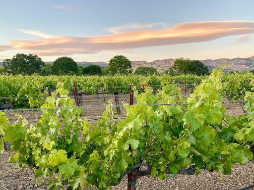 Acre Wines Image