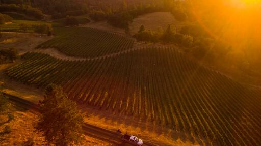 Fearless Wines Image