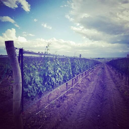 Antonio Mas Wines Image