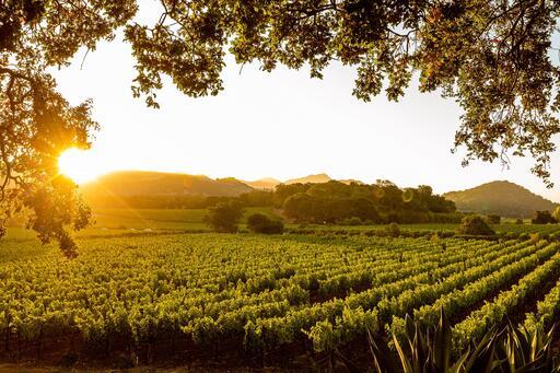 PlumpJack Winery Image