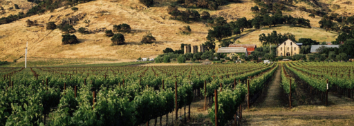 Regusci Winery Image