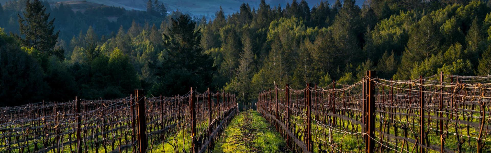 Dalecio Family Wines Cover Image