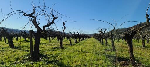Von Strasser Family of Wines Image