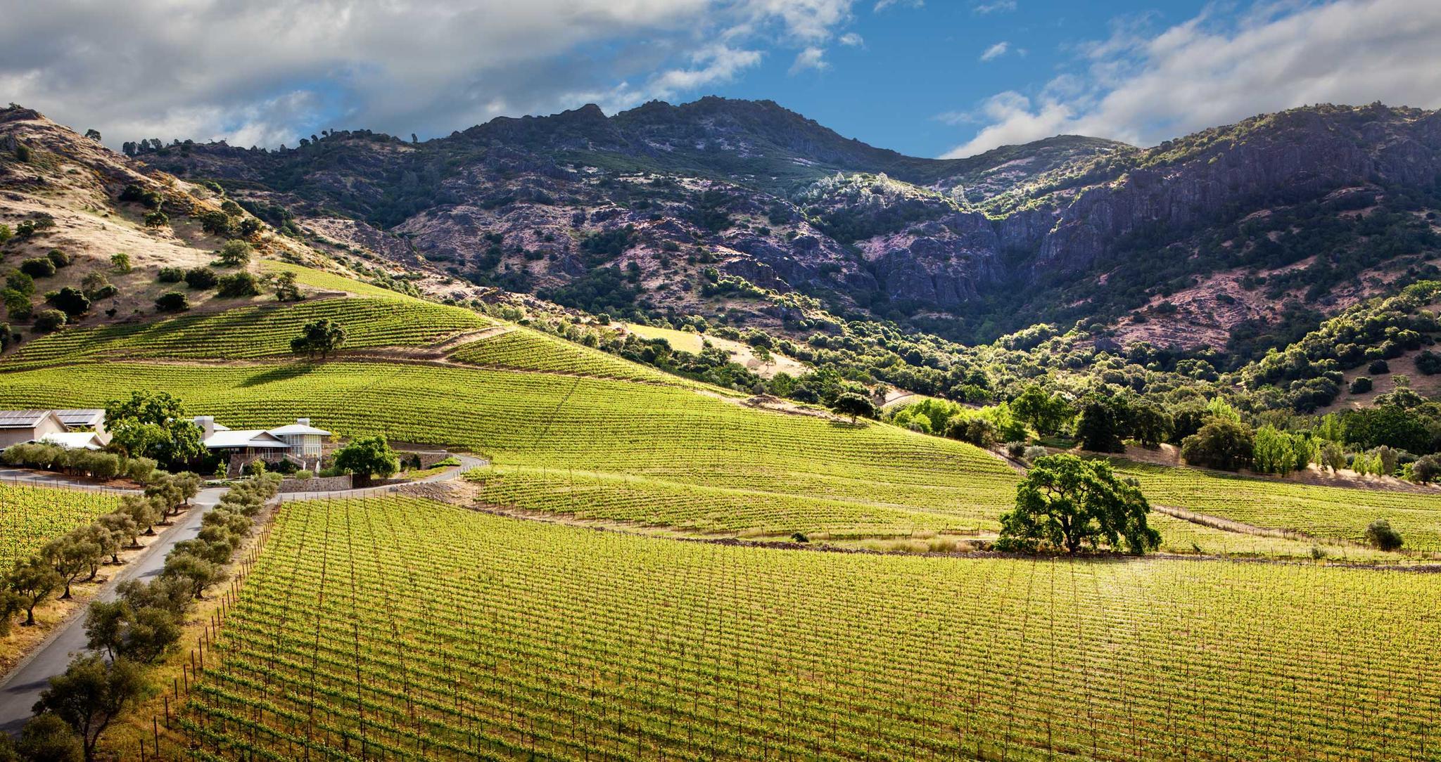 Shafer Vineyards Cover Image