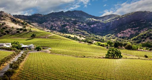 Shafer Vineyards Image