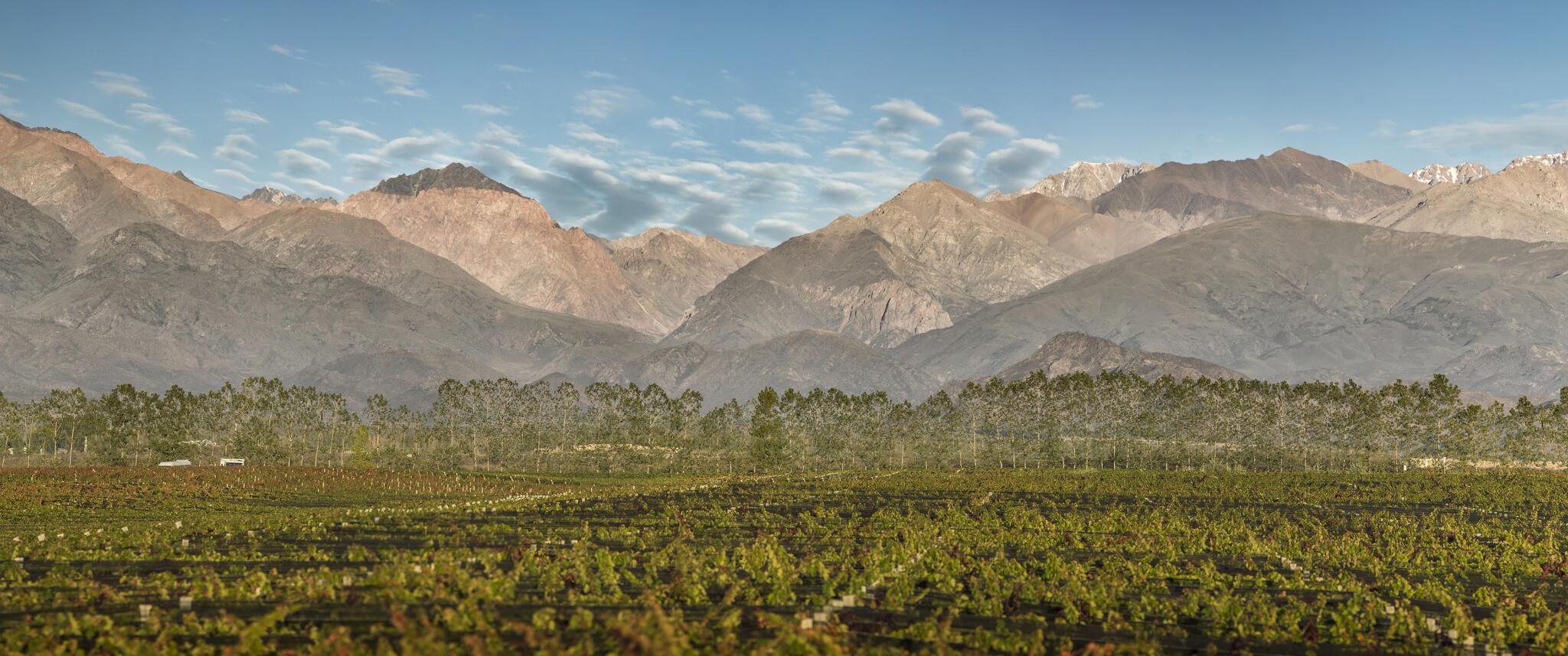 Terrazas de los Andes Cover Image
