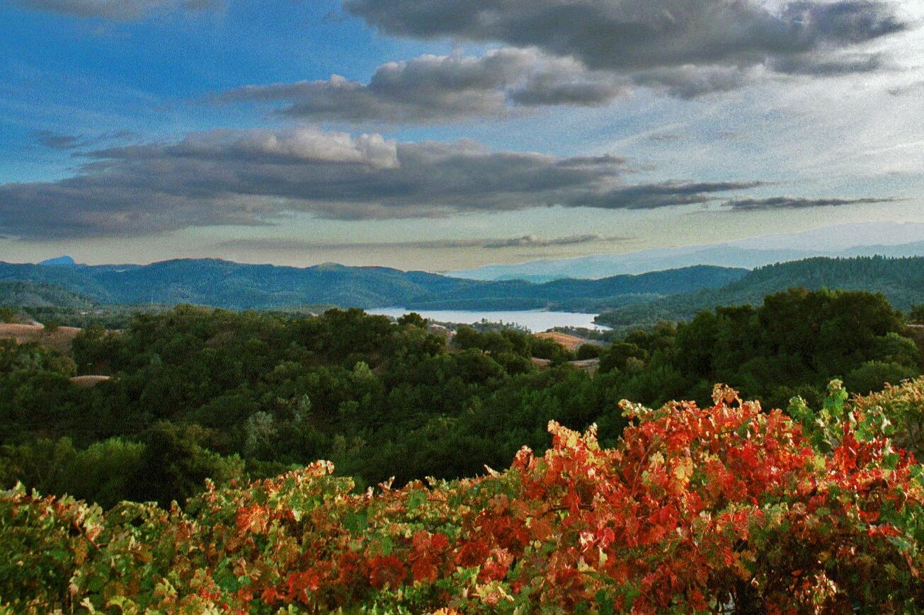 Amizetta Estate Winery Cover Image
