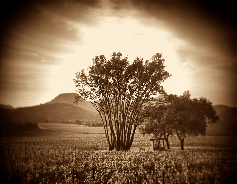 Brion Wines Cover Image