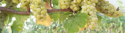 Ektimo Vineyards Image
