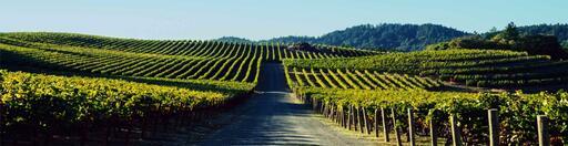Pride Mountain Vineyards Image