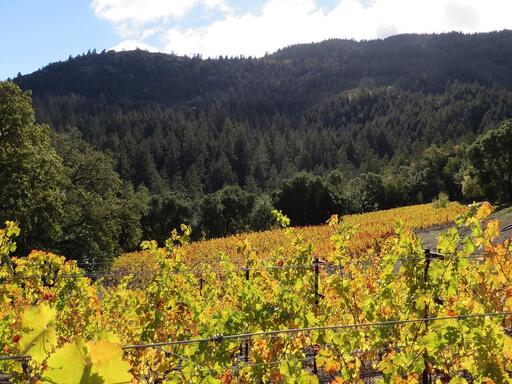 Thomas-Hsi Vineyards Image