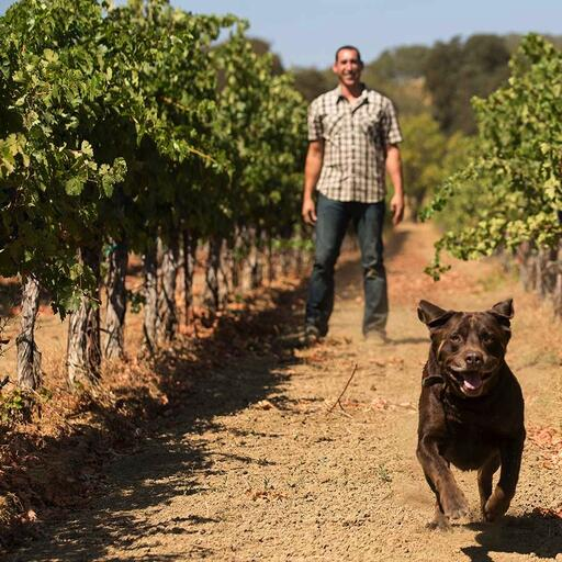 Pope Valley Winery Image