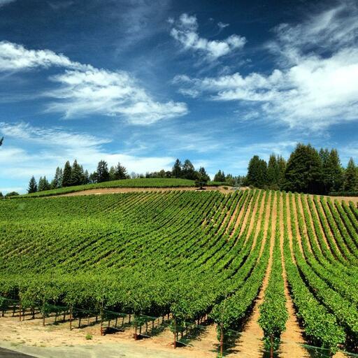 Checkerboard Vineyards Image