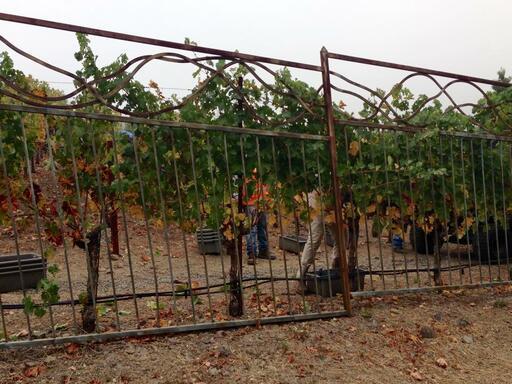 Juslyn Vineyards Image