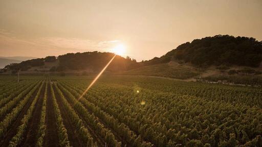 Baldacci Family Vineyards Image