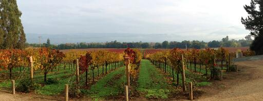 Celani Family Vineyards Image