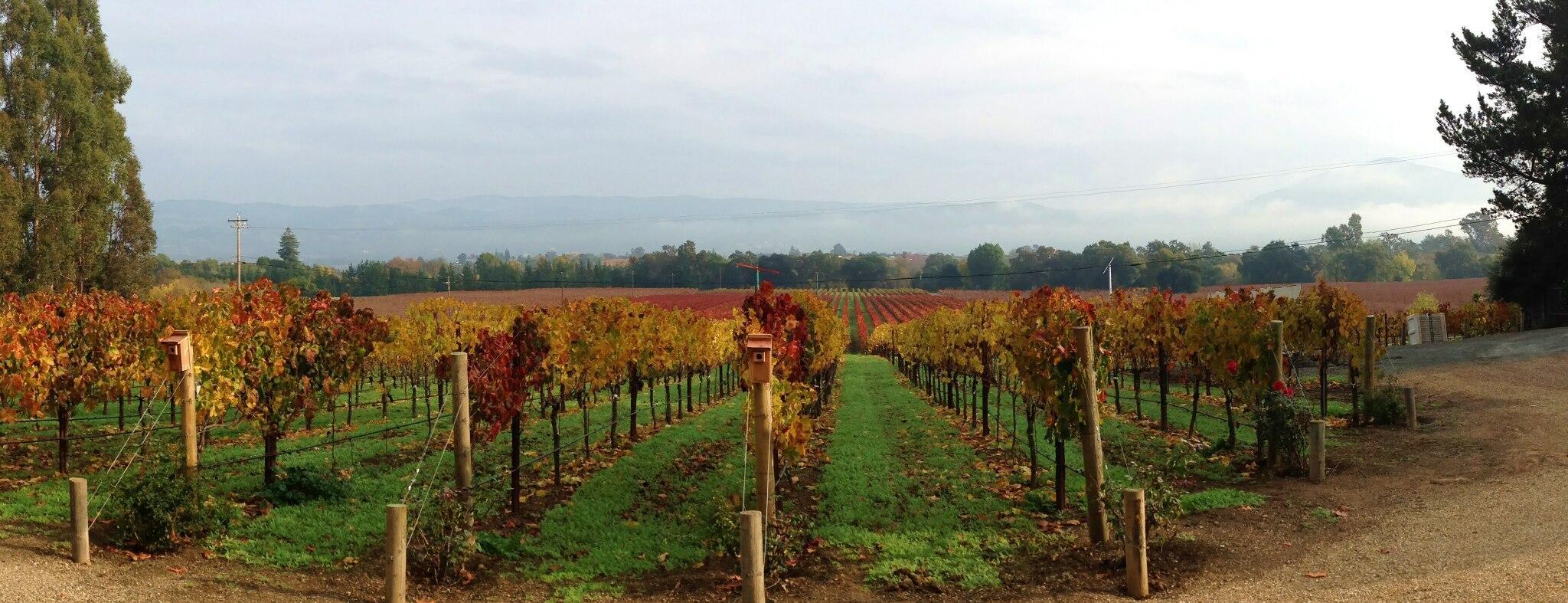 Celani Family Vineyards Cover Image