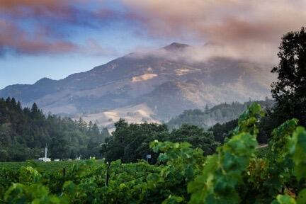 Markham Vineyards Cover Image