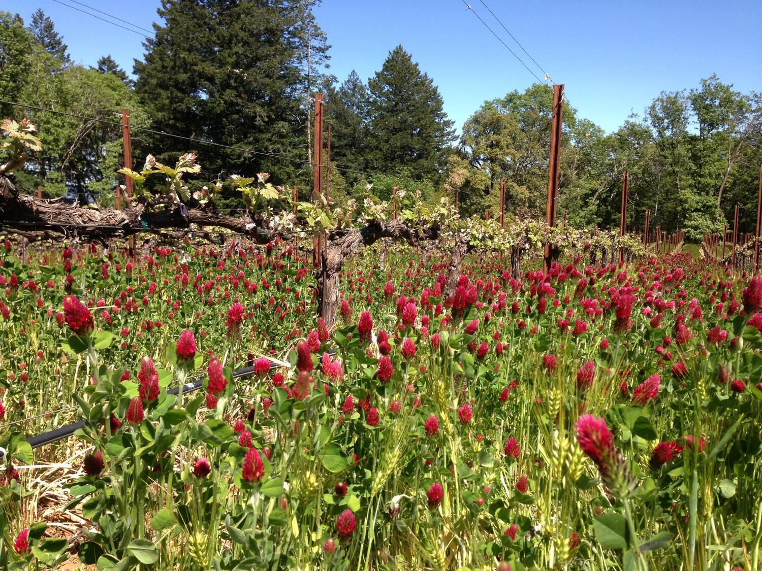 Angwin Estate Vineyards Cover Image