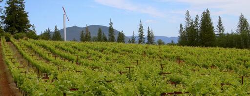 Peter Franus Wine Company Image