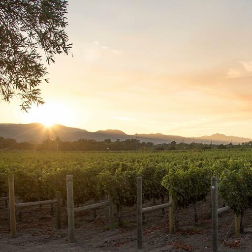 Darioush Winery Image