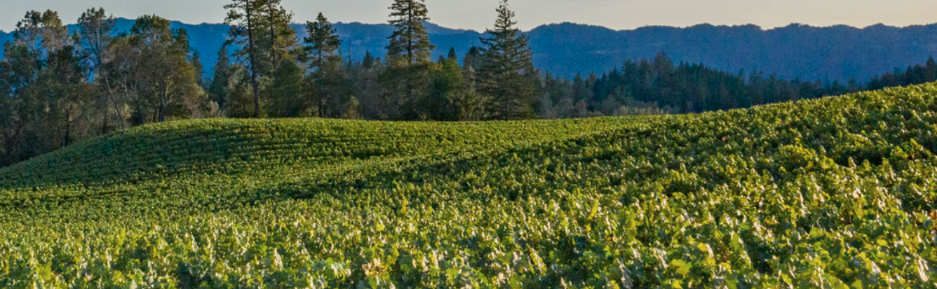 O'Shaughnessy Estate Winery Cover Image