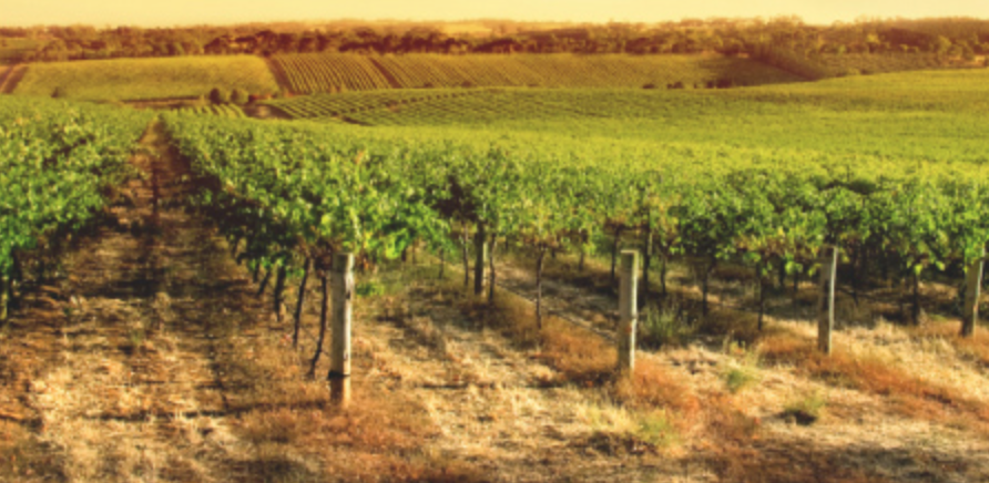 Mithra Winery Cover Image