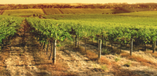 Mithra Winery Image