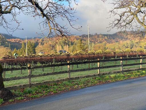Anomaly Vineyards Image