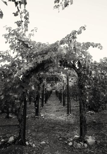 Hourglass Wine Co. Image