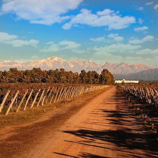 Agostino Wines Image