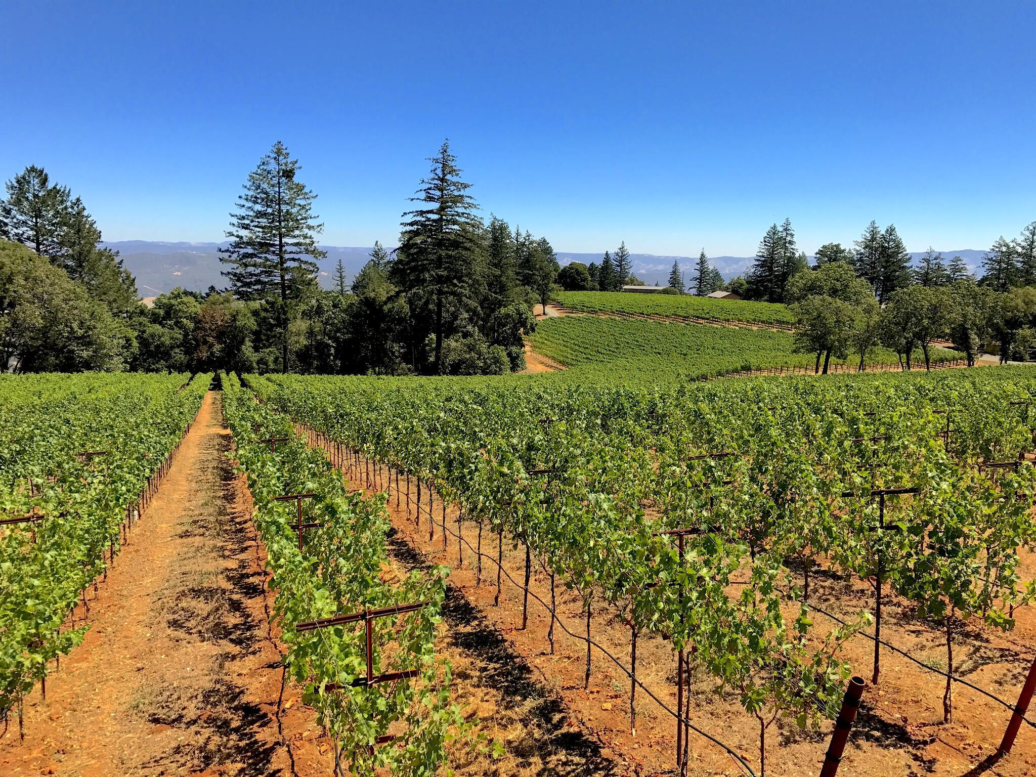 Lamborn Family Vineyards Cover Image