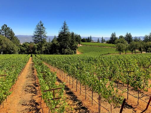 Lamborn Family Vineyards Image