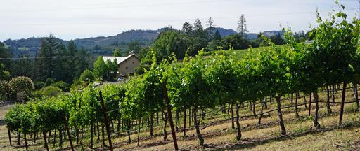 Bravante Vineyards Image