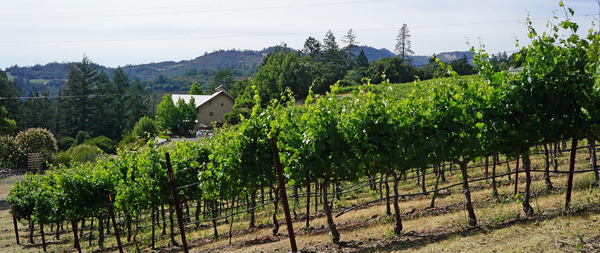 Bravante Vineyards Cover Image