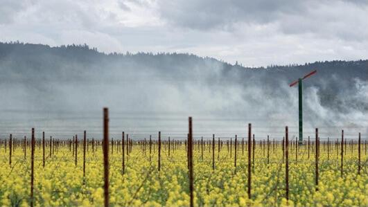 Larkmead Vineyards Cover Image