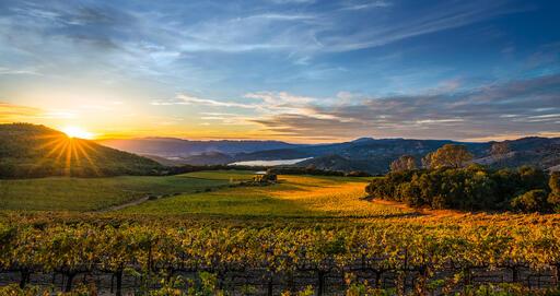 Chappellet Vineyard Image