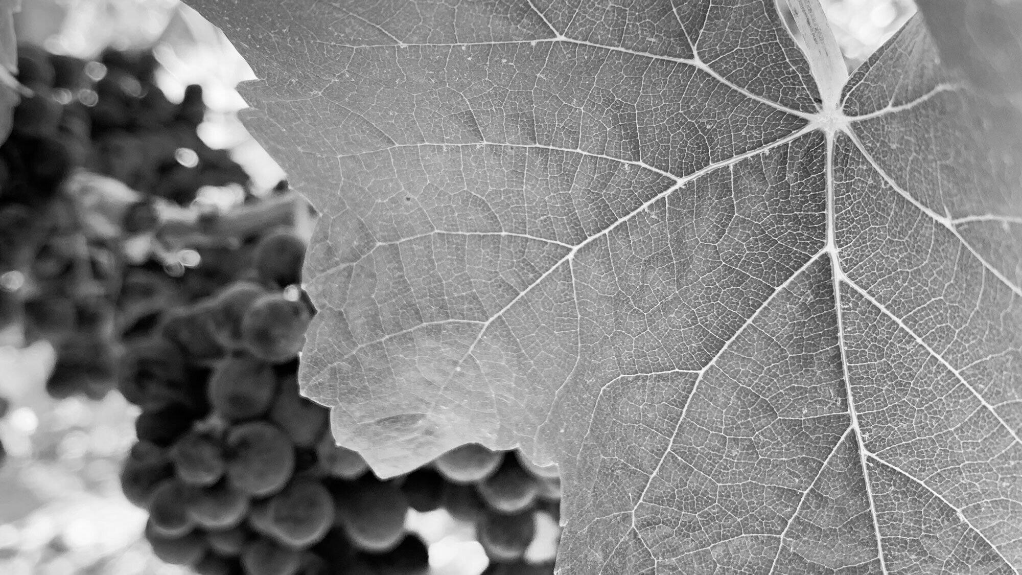 Hayfork Wine Co. Cover Image