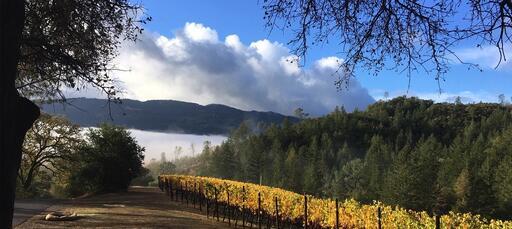 Kelly Fleming Wines Image