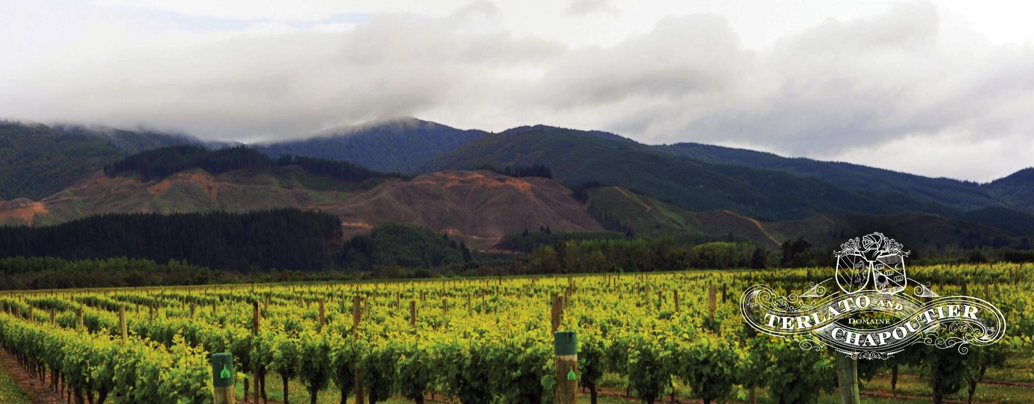 Terlato Vineyards Cover Image