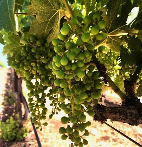 Ladera Vineyards Cover Image