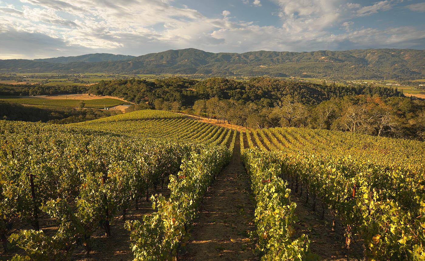 Merryvale Vineyards Cover Image