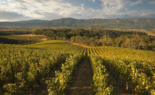 Merryvale Vineyards Image
